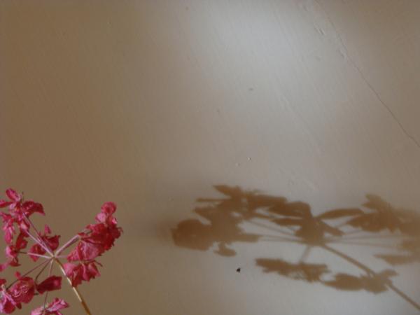 shadow.2.