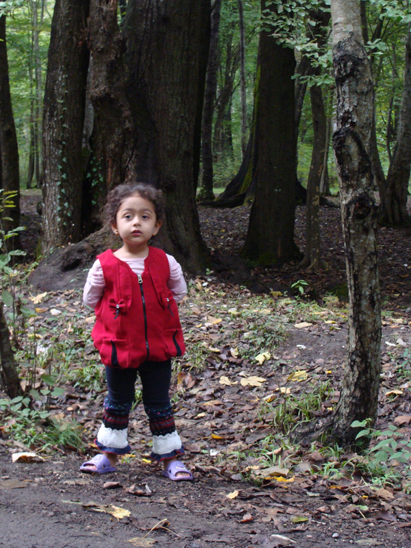 مهتا و جنگل