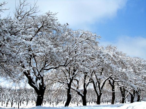 Heavy Snow and light Crow!