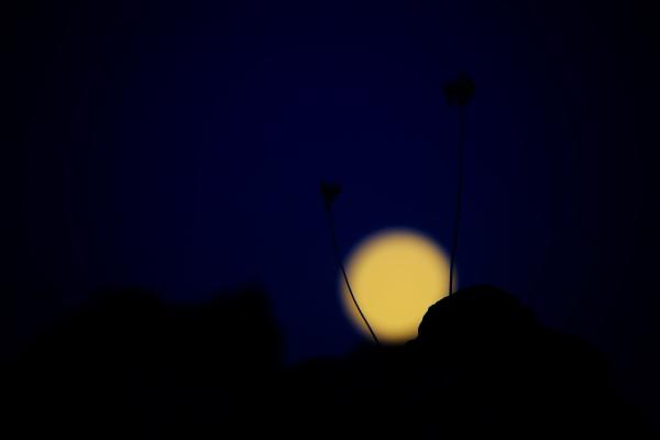 Poetic Moon!