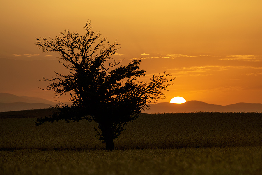 Charming Sunset