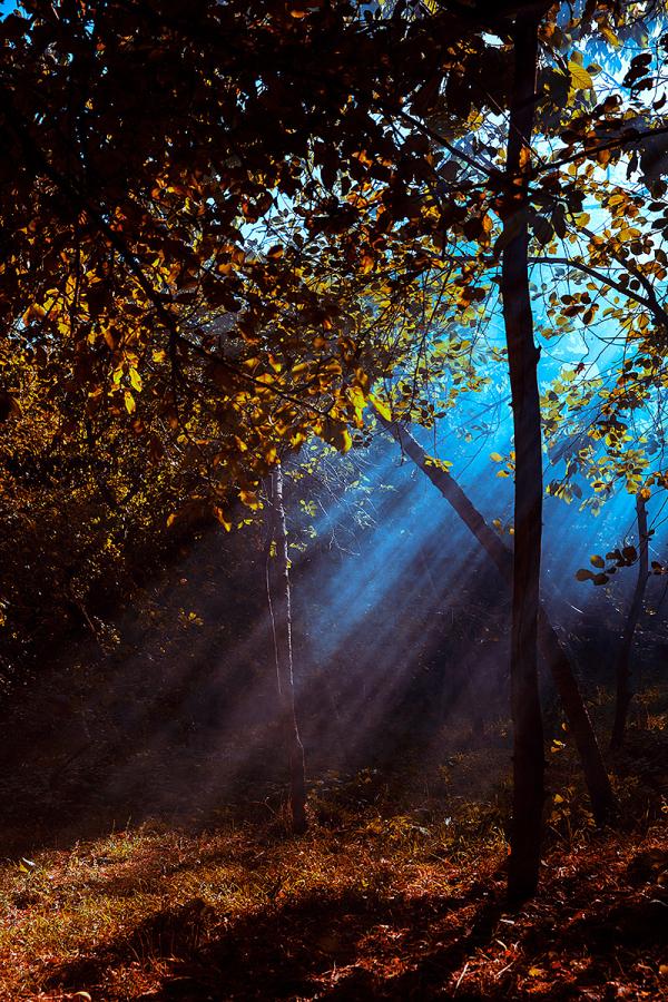Dance of Light