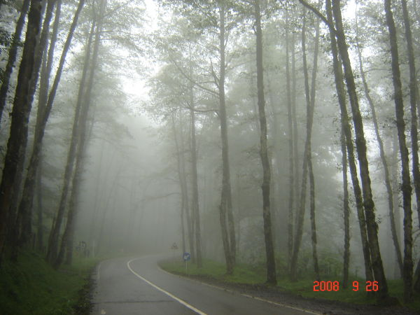 fog in dalikhani forest