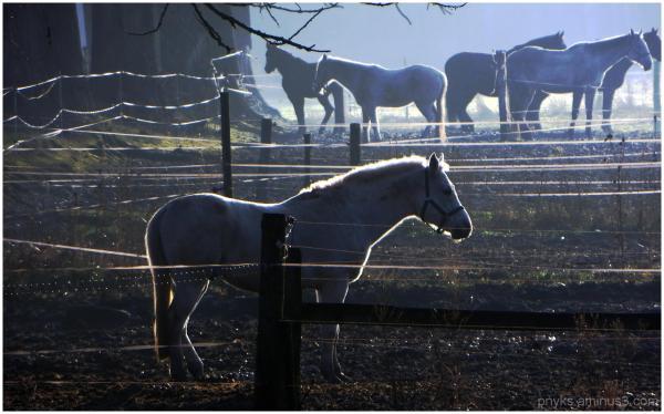 Backlit horseback