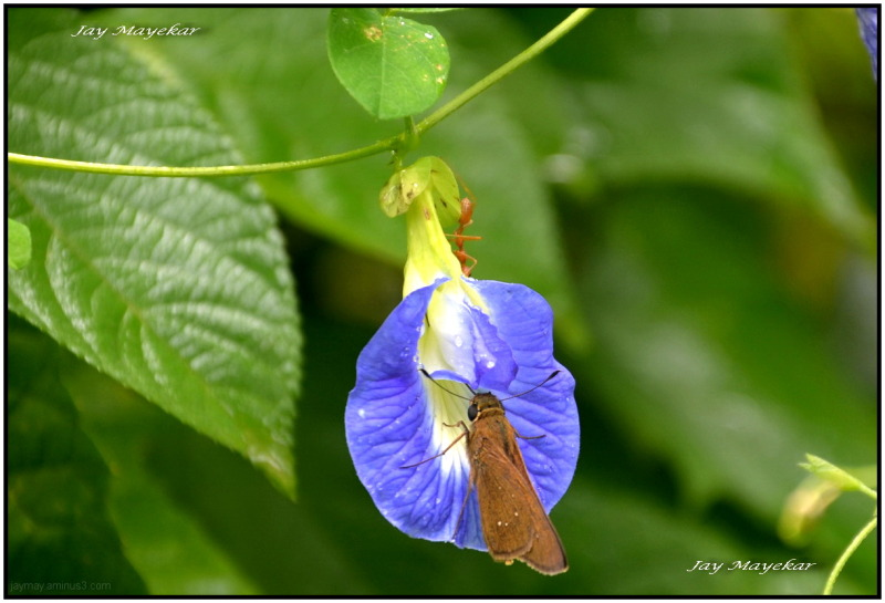 Flower's & Bee's