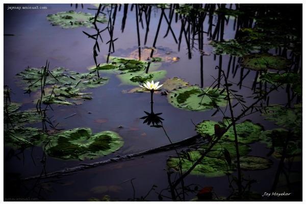 Jay Mayekar Lotus