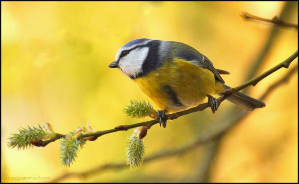 L'oiseau libre vole vers le soleil!!!