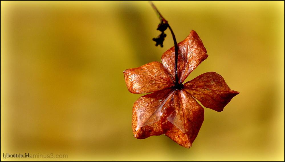 Fleur d'hiver sous la pluie