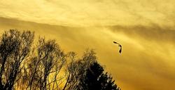 Sur les ailes du Temps, la tristesse s'envole.