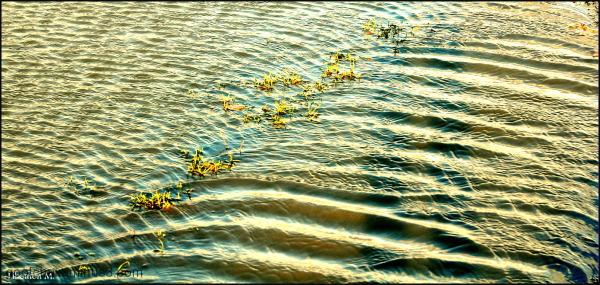 Ecailles d'eau