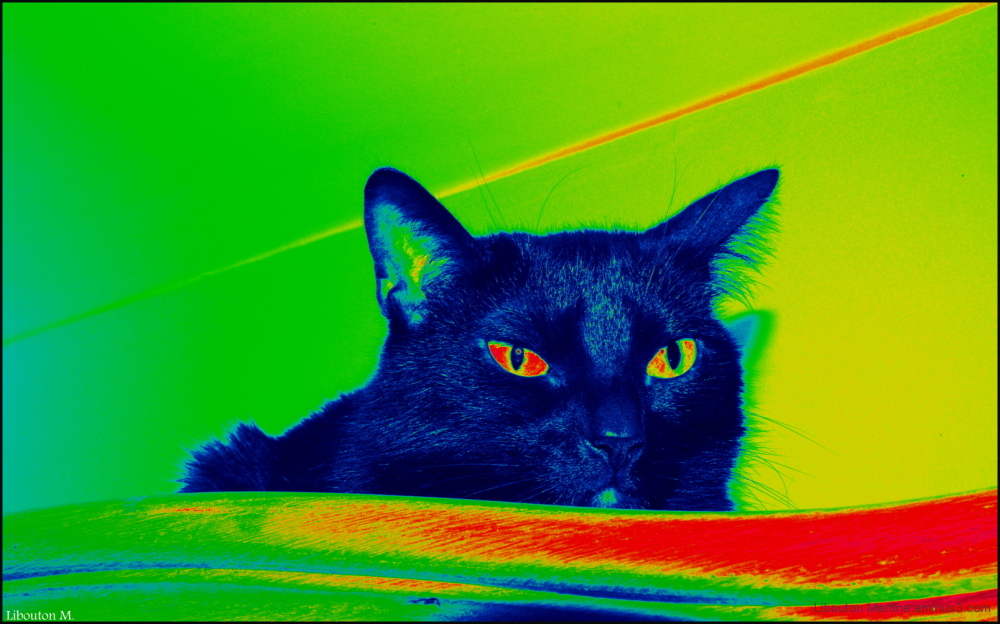 Le chat d'Andy Warhol