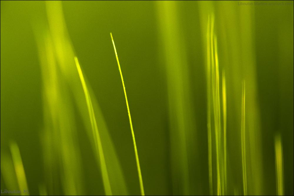 L'abstrait de la nature