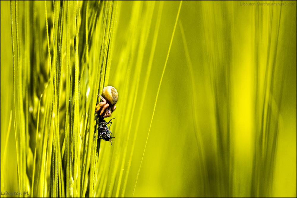 L'araignée qui a les yeux plus gros que le ventre.
