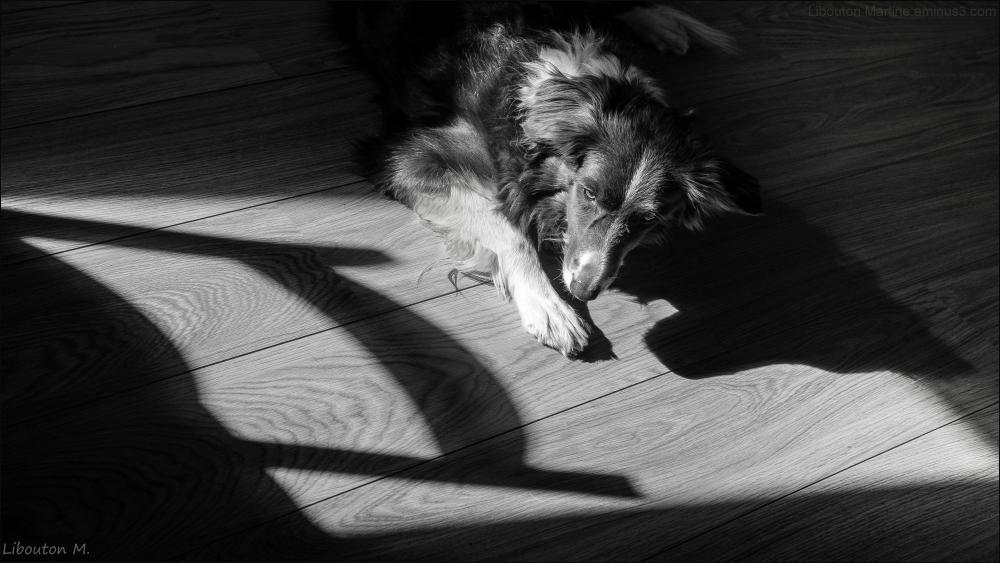 Un après-midi au soleil