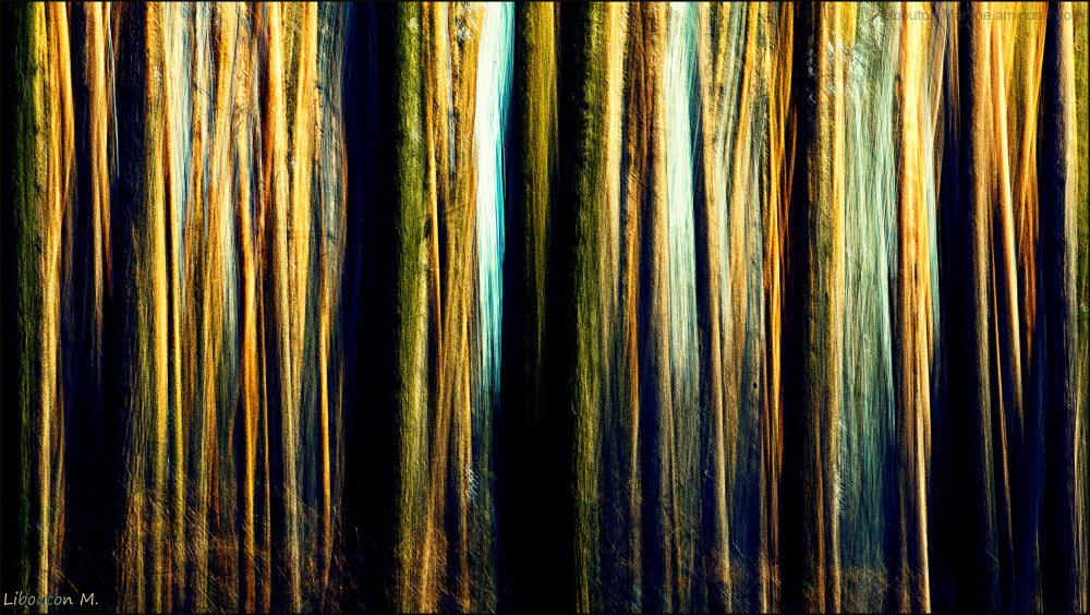 La forêt des rêves