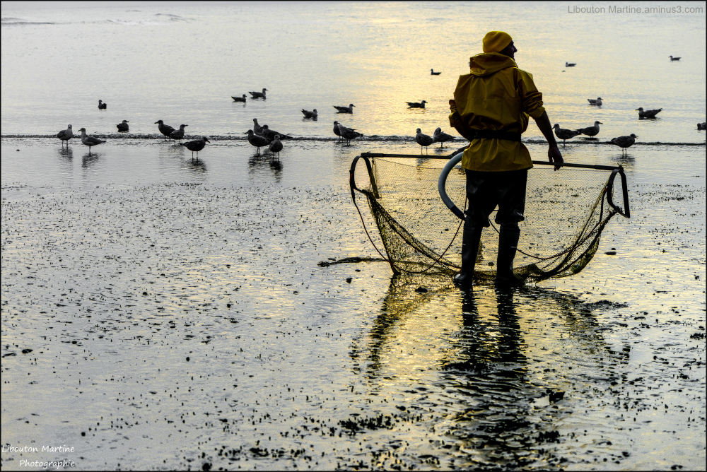 Le pêcheur  des goélands
