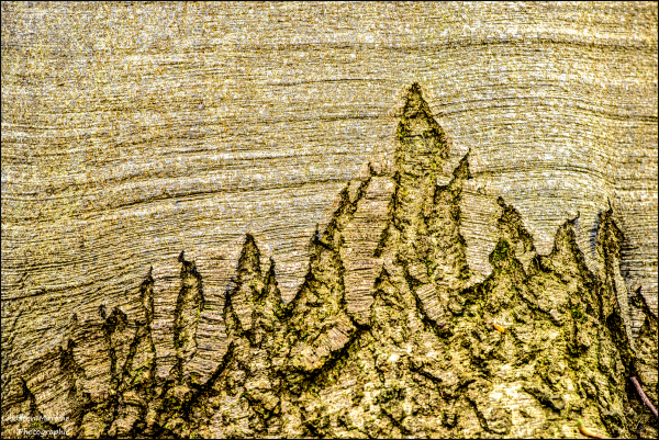 Les cimes de l'arbre