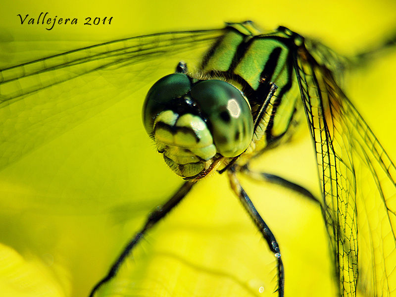 Dragonfly up close