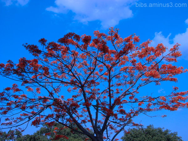 The red tree...
