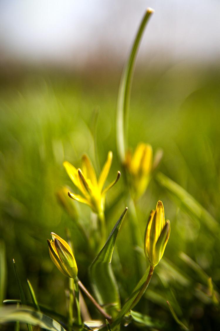 Spring flower 1.