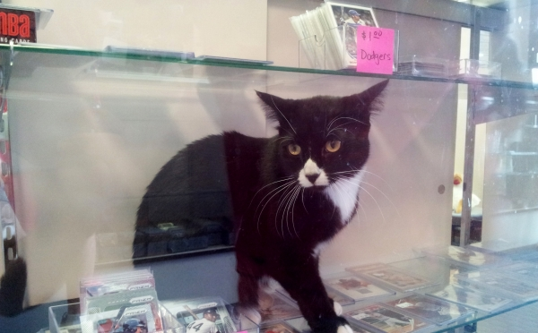 cat in display case