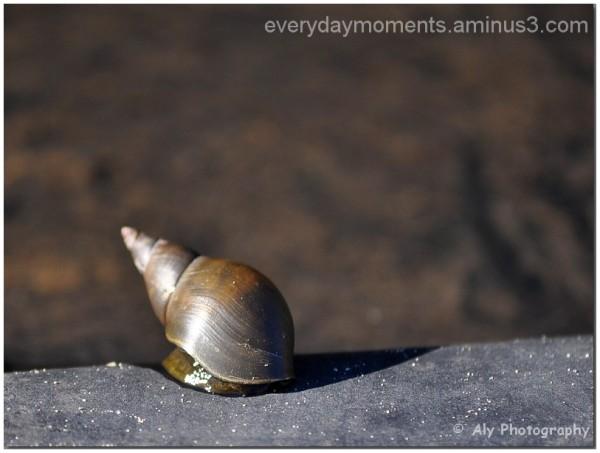 Nikon D5000,slak,snail