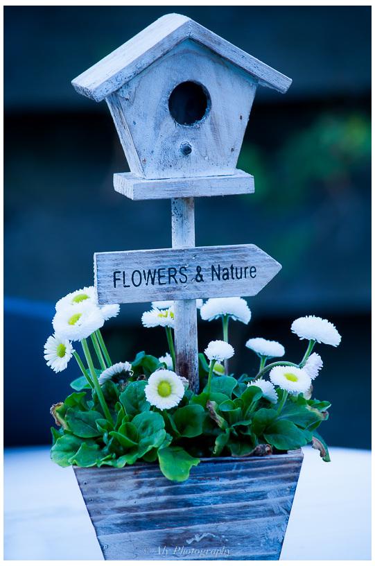 Bloemen, Lente,