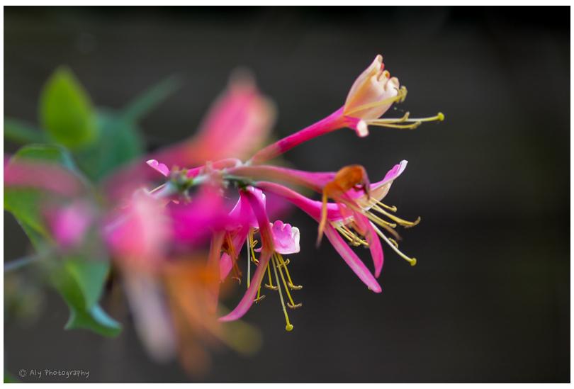 the last flowering