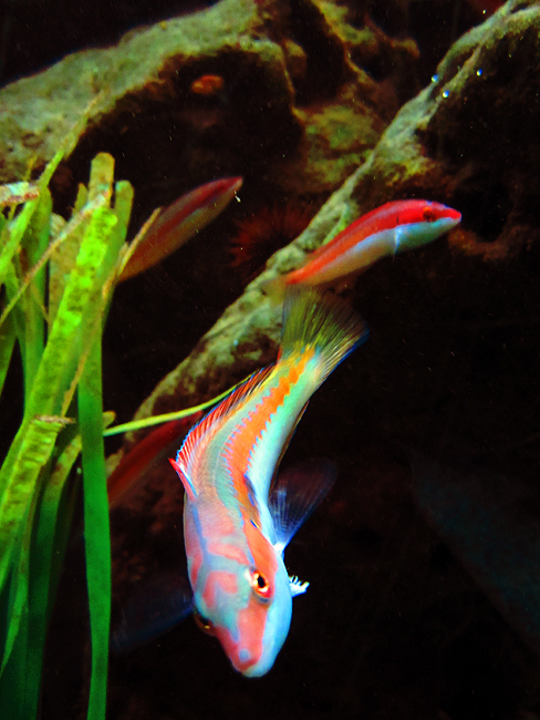 At The Aquarium II