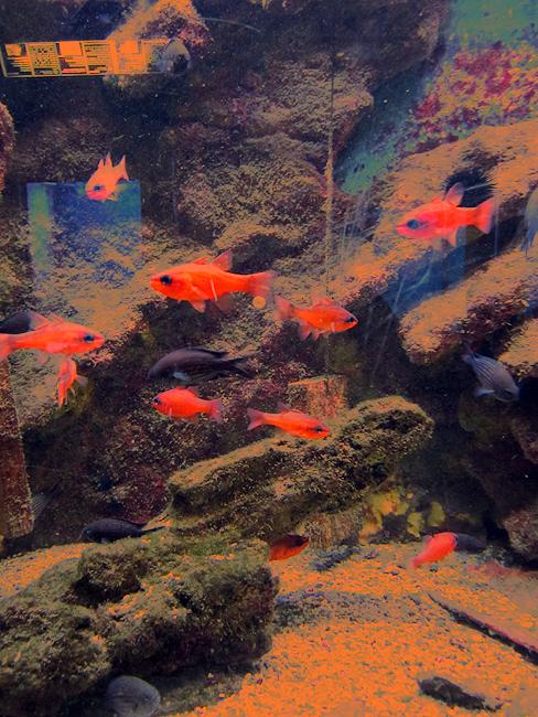 At The Aquarium IV