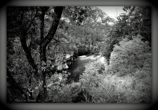 Dans les gorges du Tarn