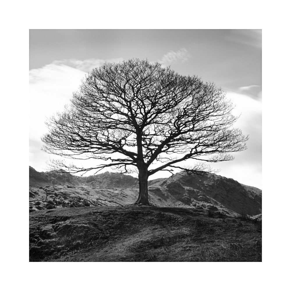 S ingle tree in black & white in the Lake District