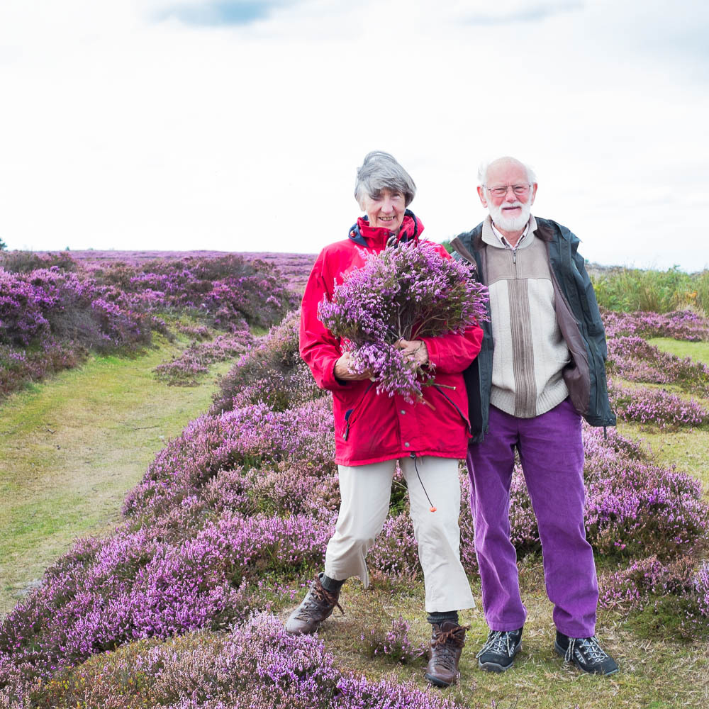Heather picking in Yorkshire