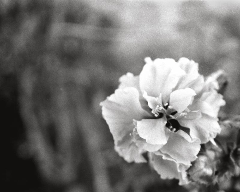 Flower film negative nature