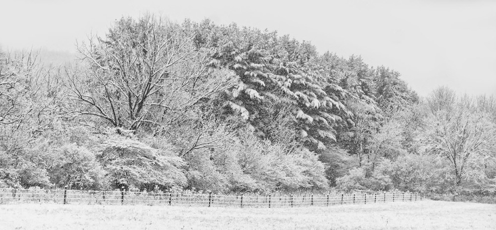 Meadow fence and trees in snow storm