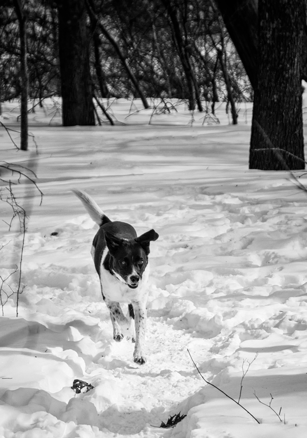 Lucy on Snow Trail