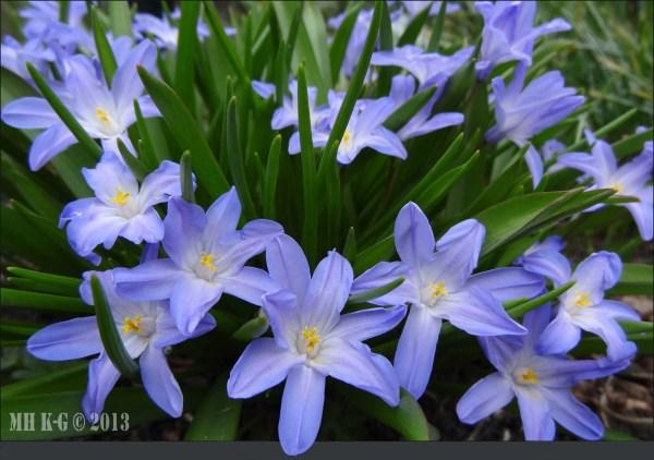 Mijn tuin kleurt blauw !