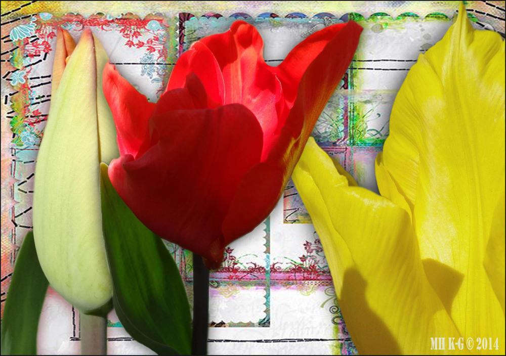 Tulip`shop`