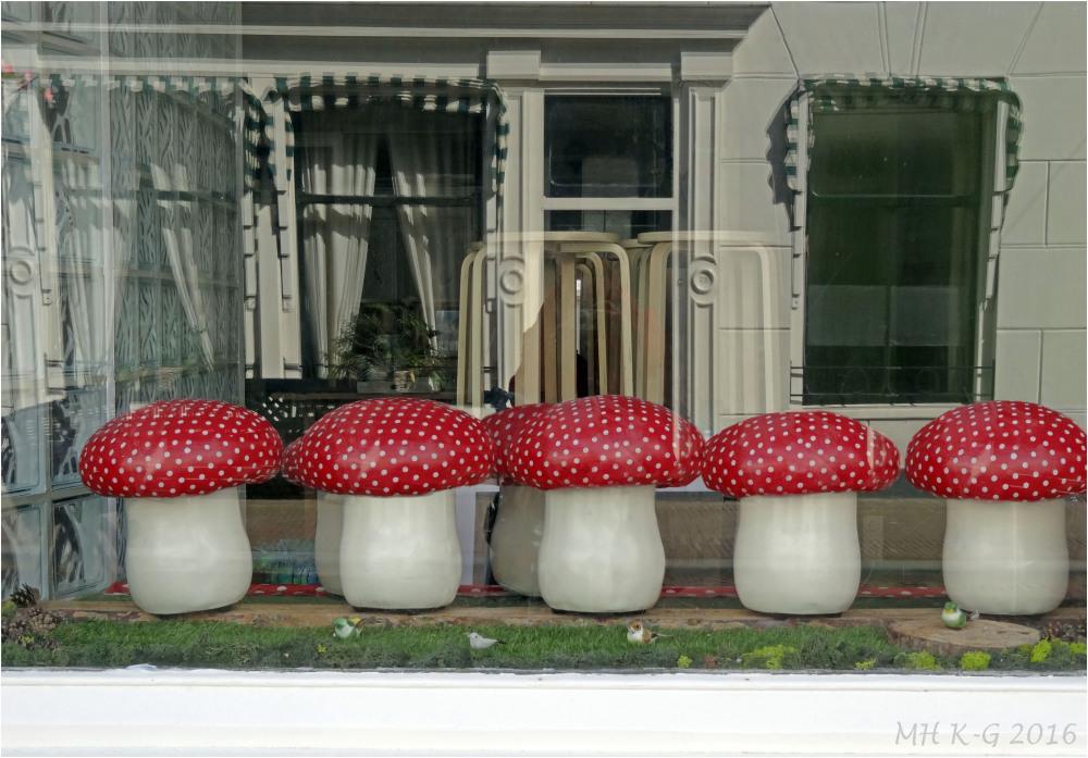 Mushrooms in the window