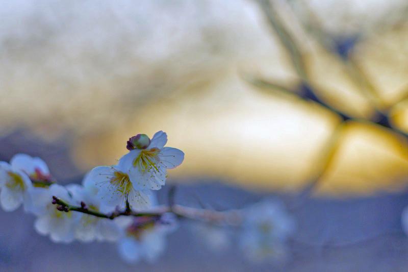 Spring yet ...