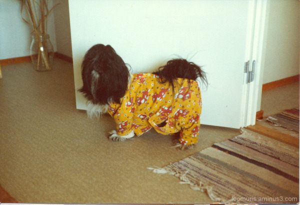 Koira - Dog