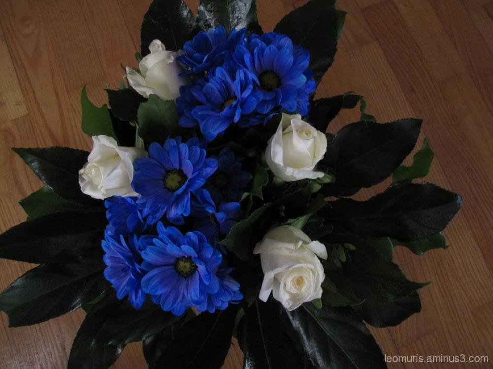 kukat - Flowers