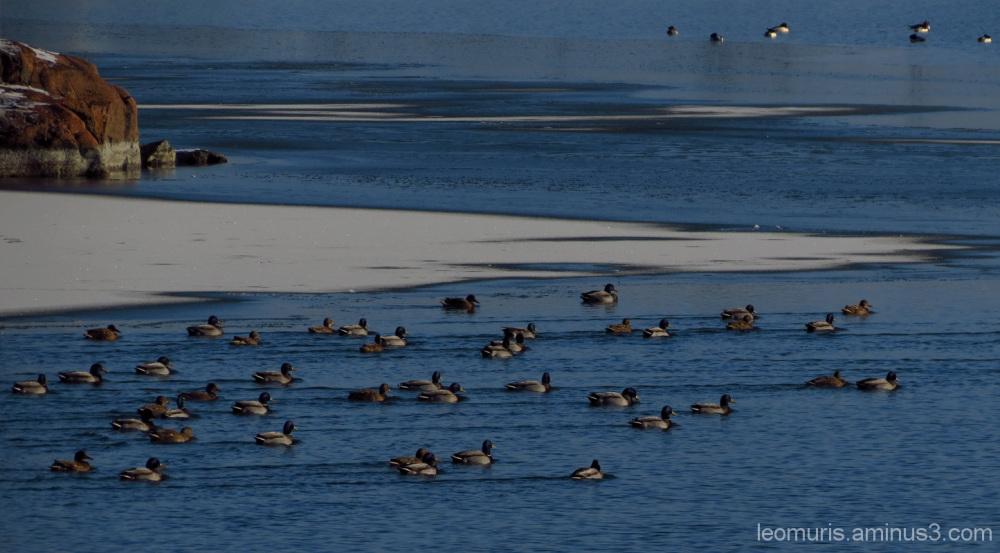 Uimarit - Swimmers