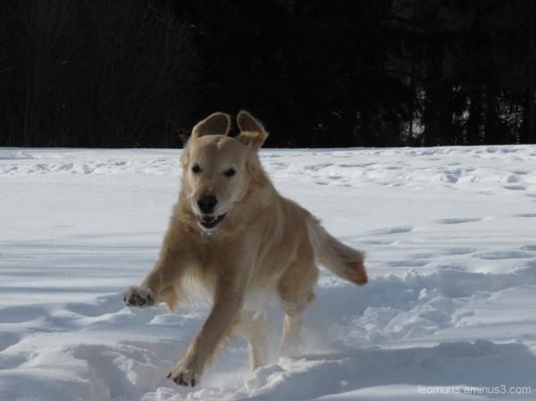 Iloinen koira - Happy Dog