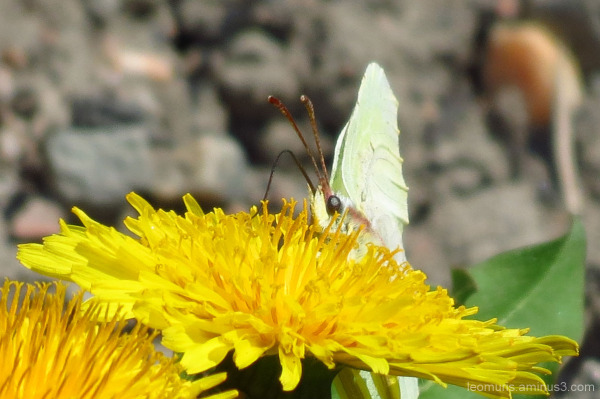Kukat ja perhonen - Flowers and butterfly