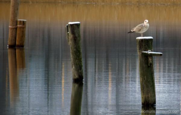 Lintu - bird