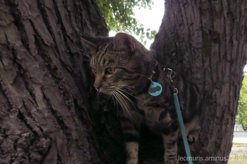 Leevi in the tree