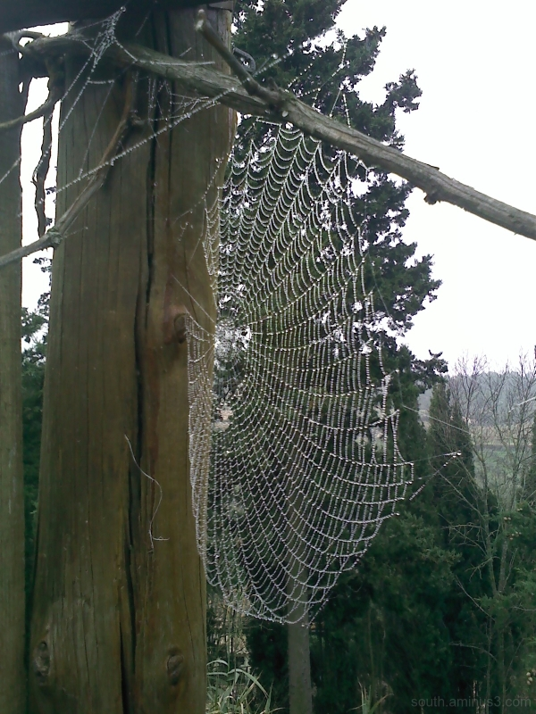spider net nature rain