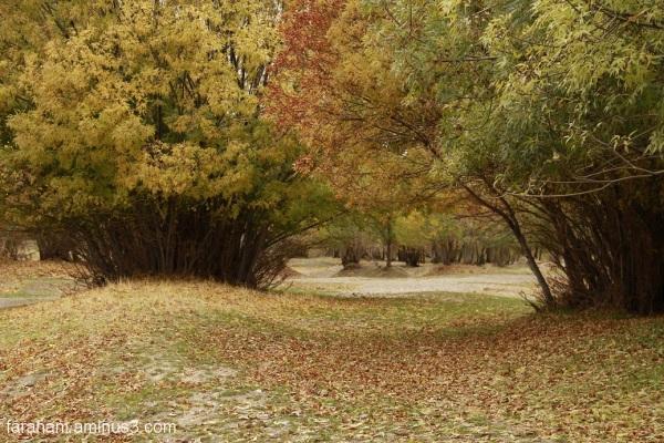 پاییز بهاری است که عاشق شده است
