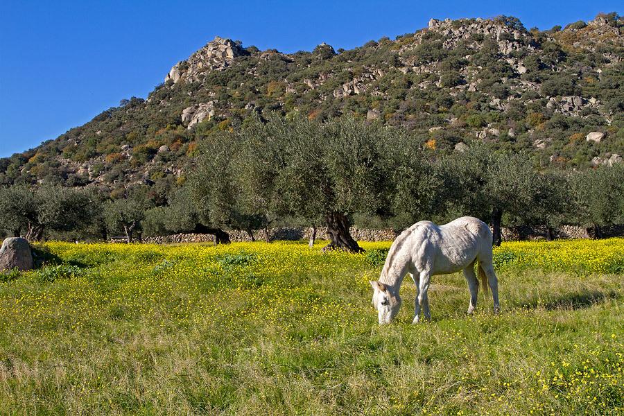 Extremadura - 6 december